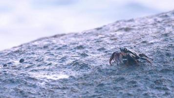 Crab on the rock at the beach