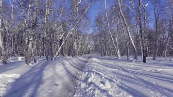 voando para a floresta entre as cepas das árvores no inverno