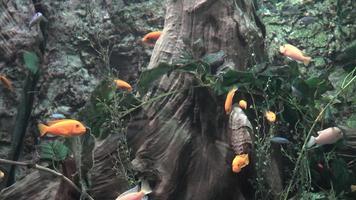 kleine vissen in aquarium