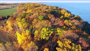 scenico cavalcavia aerea cime degli alberi autunnali di colori autunnali
