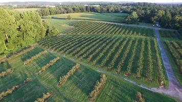 Orchard farm aerial view