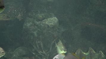 Fische schwimmen im Tank
