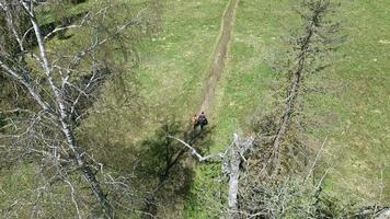 casal em caminhada na floresta video