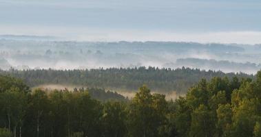 Zeitraffer von dichtem Nebel, der über ein waldbedecktes Tal fließt
