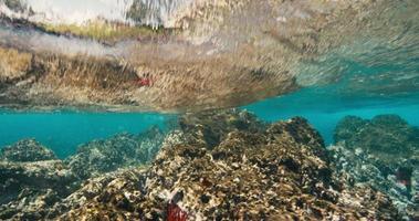 recife de coral tropical e ondas do mar subaquáticas