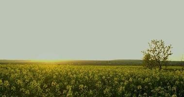 lasso di tempo tramonto sul campo di colza in campagna, scatti grezzi hdr