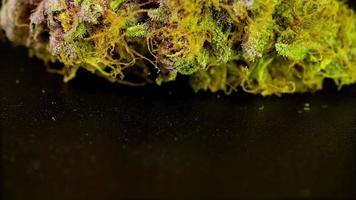 prodotto macro rotante colpo di marijuana di alta qualità, su uno sfondo nero solido