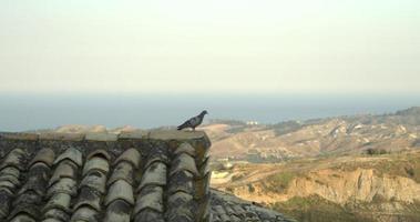 colomba sul tetto della vecchia casa italiana.