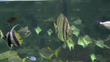 peixes nadando em aquário