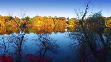 muovendosi tra il fogliame autunnale colorato sul bordo del fiume