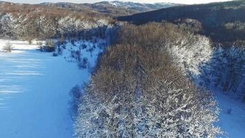 vliegen over een bevroren bos met een weg