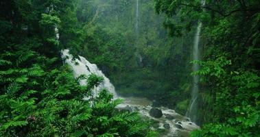 Incroyable cascade dans la forêt tropicale humide sur la route de Hana à Maui, Hawaii