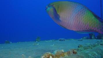 naufragio sottomarino nel mar rosso video