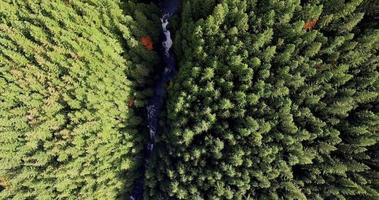 Antena mirando hacia abajo en Wallace Falls, tierras boscosas del estado de Washington.