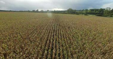 vista aerea del campo di grano video