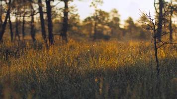 rocío de la mañana sobre tallos de hierba y telas de araña