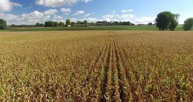 vista aerea e viaggio girato attraverso le linee del campo di grano video