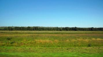 pov: muoversi lungo un campo selvaggio e una foresta sullo sfondo ad Altay, in Russia video