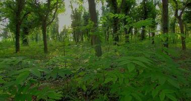 Walddämmerung, Zeitraffer motorisierte Schieberegler HDR mit beweglichen Baumschatten und Sonnenstrahlen