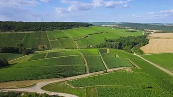 veduta aerea di vigneti di champagne, dipartimento dell'aube, les riceys