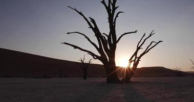 4K moving shot of sun setting behind dead trees in Dead vlei inside the Namib-Naukluft National Park