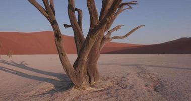 4k beweglicher Schuss von toten Bäumen in toten Vlei innerhalb des Namib-Naukluft-Nationalparks