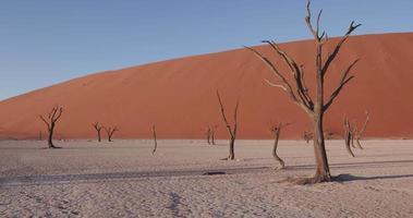 4k Schwenkaufnahme von toten Bäumen in toten Vlei innerhalb des Namib-Naukluft-Nationalparks