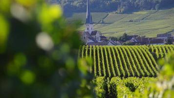 vigneti di champagne nella zona delle montagne de reims del dipartimento della marna, champagne-ardennes, in francia, in europa