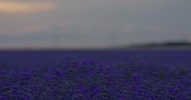 schöner Sonnenuntergang über einem Lavendelfeld. HDR-Zeitraffer mit motorisiertem Schieberegler und beweglicher Sonne mit roten Wolken