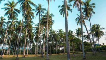 Tailândia phuket ilha palmeira pôr do sol panorama 4k time lapse