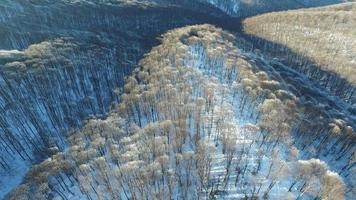 Flying Over a Frosty Winter Trees.