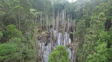 bosque wangyou, plataforma rodante aérea b video