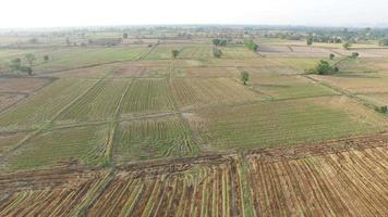 Aerial View Of An Empty Rice Field After Harvesting video