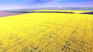 vista aérea del campo de colza, flores amarillas y cielo azul.