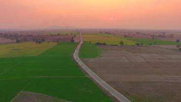 Aerial of rice field with dramatic sunset sky video