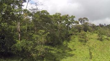 Flying over cattle pasture in Ecuador