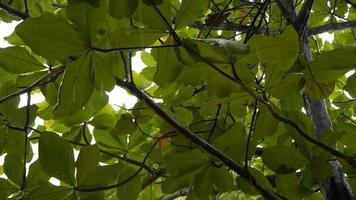 gotas de chuva caindo nas folhas das árvores