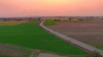 Aerial of rice field with pastel sunset sky - Thailand video