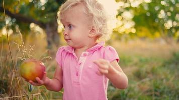 A cute little girl carries a fresh picked apple over to the bed of a truck video