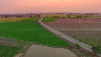 Aerial of rice field with pastel sunset sky video