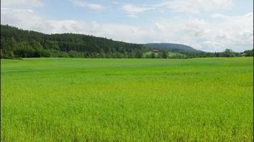 fattoria del villaggio norvegese vicino a oslo, norvegia video