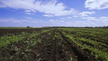campo de agricultura video