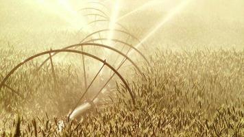 aspersor agrícola video