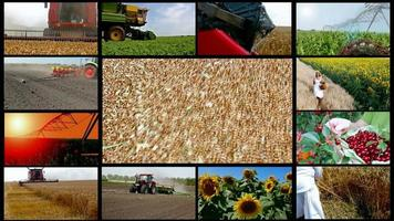 Agriculture-split screen