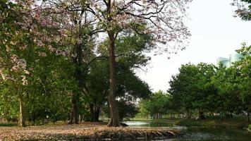 parc public à bangkok