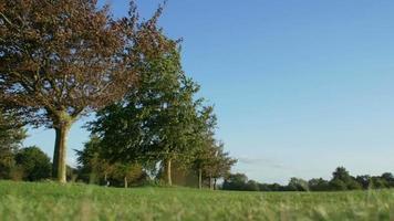 parque público da inglaterra: prado verde e céu azul: calma e tranquilidade video