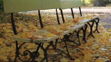 pareggiatore nel parco d'autunno video