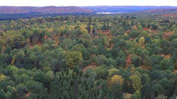 Algonquin forest overlook in autumn