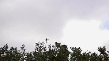 pajarito volando en cámara lenta en el parque nacional cabo le grand