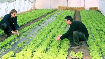 engenheiros agrícolas - trabalho em equipe video